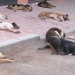 غياب حقن داء الكلب يغضب ساكنة مدينة تيزنيت