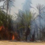 حريق مهول يلتهم واحة ضواحي بكلميم .. والوقاية تحاول السيطرة عليه