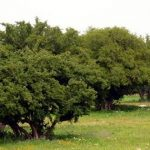 إقليم كلميم ... مشرع يروم غرس 14 ألف شجرة أركان على مساحة 75 هكتار
