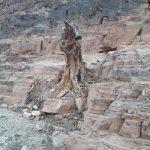 من يحمي شجرة الأركان بإقليم كلميم؟