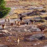 قطيع كلاب يرتكب مجزرة داخل حظيرة للمواشي قرب تزنيت