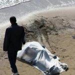البحر ضواحي كلميم يلفظ جثتين لشخصين مجهولي الهوية