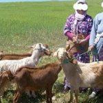 التنمية تبتدأ من الدوار … المرأة القروية في عيد أختها الأممي